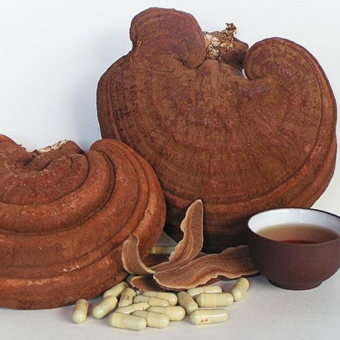 Nấm linh chi rừng Đà Lạt tốt cho sức khỏe  - Chỉ 299.000đ/01 kg