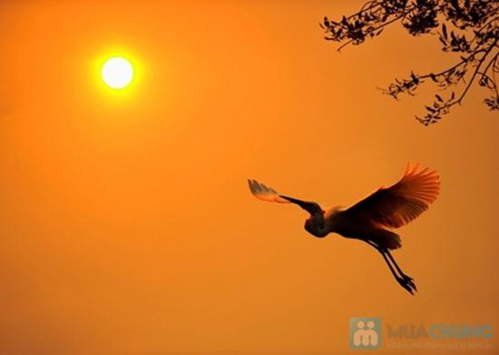 Cánh chim chiều 1
