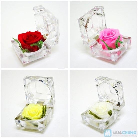 Hoa Hồng Bất Tử - Hoa hồng thật 100%, món quà tuyệt diệu tri ân ngày 20/11 - Chỉ với 90.000đ - 1