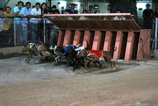 Cho bạn những phút giây xem đua chó thật cực vui và gây cấn tại chỉ 540.000đ/2 vé - 4