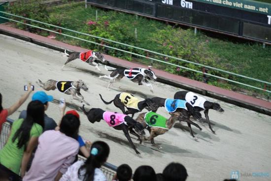 Cho bạn những phút giây xem đua chó thật cực vui và gây cấn tại chỉ 540.000đ/2 vé - 13