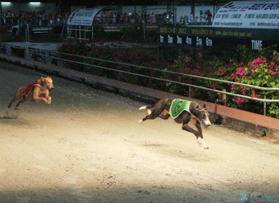 Cho bạn những phút giây xem đua chó thật cực vui và gây cấn tại chỉ 540.000đ/2 vé - 18