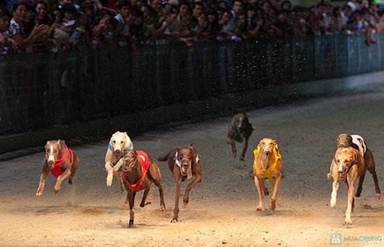 Cho bạn những phút giây xem đua chó thật cực vui và gây cấn tại chỉ 540.000đ/2 vé - 9