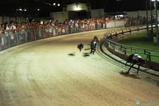 Cho bạn những phút giây xem đua chó thật cực vui và gây cấn tại chỉ 540.000đ/2 vé - 5