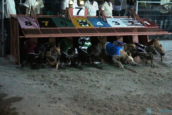 Cho bạn những phút giây xem đua chó thật cực vui và gây cấn tại chỉ 540.000đ/2 vé - 2