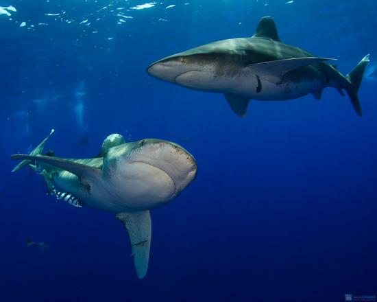 Thực phẩm bổ sung sụn vi cá mập Shark Cartilage - Chỉ với 338.000đ - 4