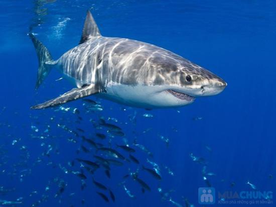 Thực phẩm bổ sung sụn vi cá mập Shark Cartilage - Chỉ với 338.000đ - 1