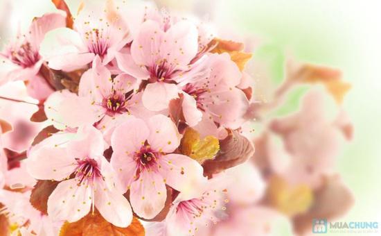 Hương thơm ngập tràn ngày Tết với combo 05 nước hoa khô - Chỉ với 90.000đ - 1