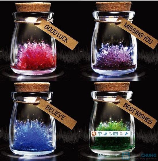 Hoa thủy tinh ước nguyện - món quà độc đáo, dễ thương cho ngày 8/3 - Chỉ 50.000đ - 1