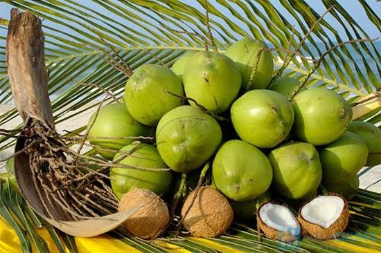 Dầu hấp tinh chất dầu dừa - 8