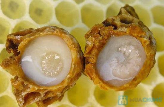 TPVN : phấn hoa và sữa ong chúa - 2
