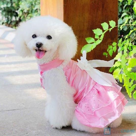 Tìm kiếm cơ hội đầu tư nhãn hiệu thời trang thú cưng