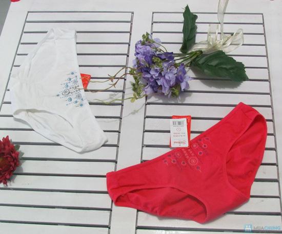 Combo 6 quần lót thương hiệu Selina-Paltal - 4