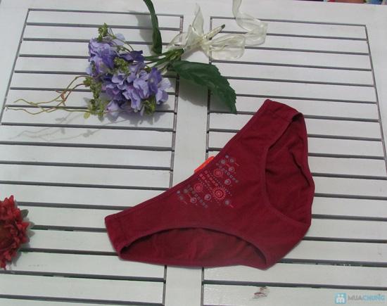 Combo 6 quần lót thương hiệu Selina-Paltal - 2