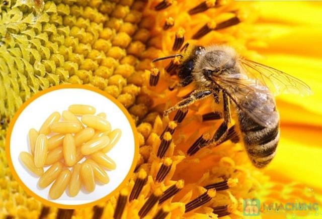 365 Viên Sữa ong chúa Royal Jelly Costar 1450mg chính hãng nhập khẩu từ Úc  - 9