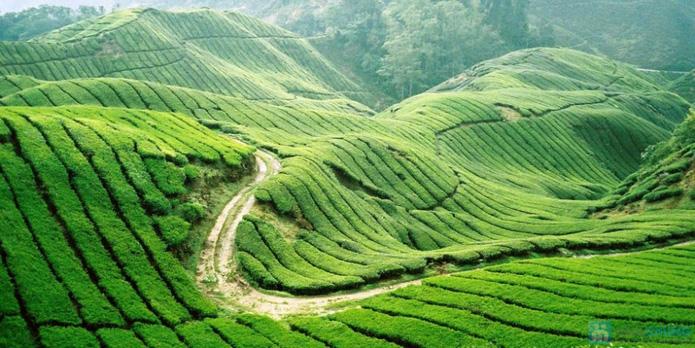Khám phá hương sắc núi rừng Thung Nai - Mộc Châu mùa mơ và mận   (2 ngày 1 đêm) - 3