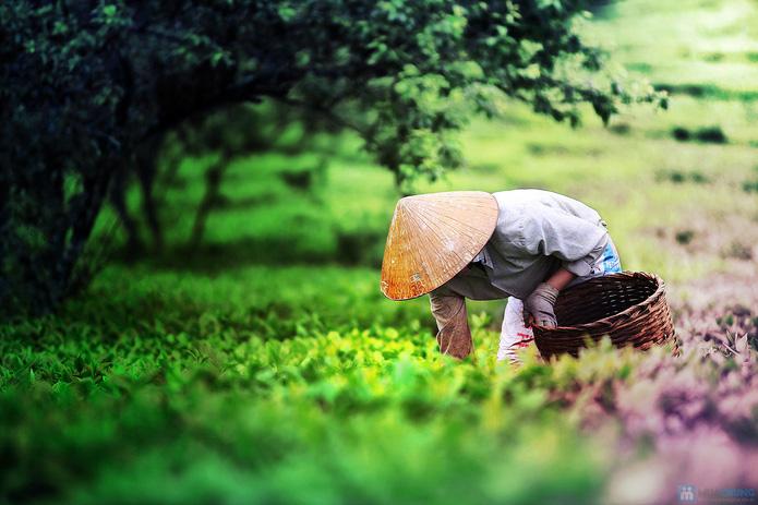 Khám phá hương sắc núi rừng Thung Nai - Mộc Châu mùa mơ và mận   (2 ngày 1 đêm) - 1