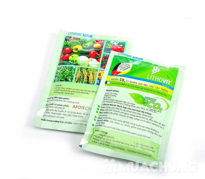Combo 2 gói phân bón Lithovit cho hoa, cây cảnh - 2