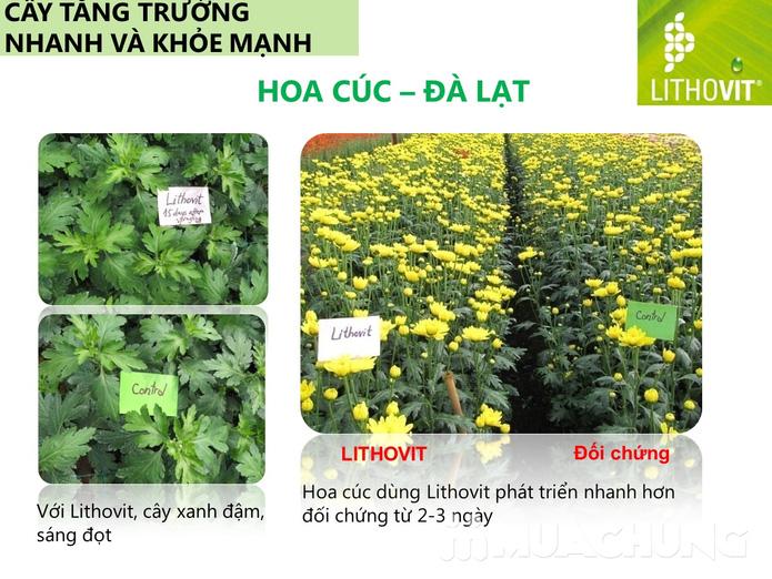 Combo 2 gói phân bón Lithovit cho hoa, cây kiểng - 3