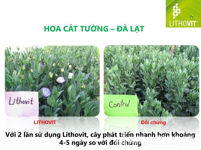 Combo 2 gói phân bón Lithovit cho hoa, cây kiểng - 4