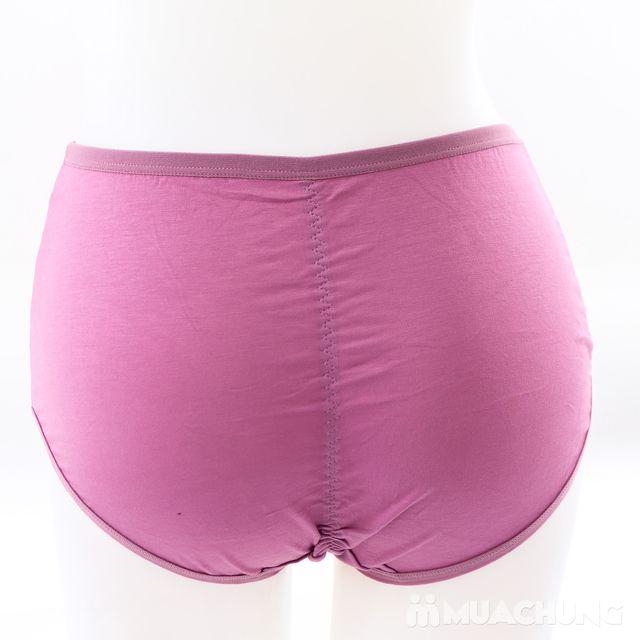 05 quần lót cạp cao chất cotton - hàng Việt Nam - 15