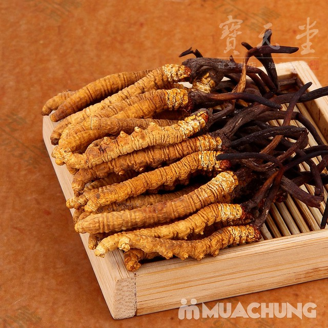 Đông trùng hạ thảo dạng viên - Nhập khẩu Hàn Quốc - 3
