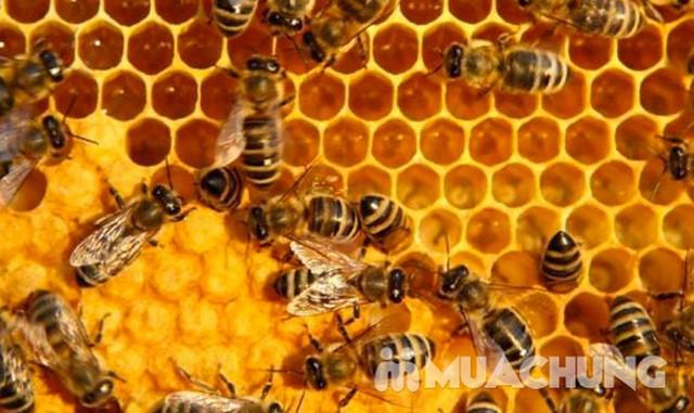 Mật ong thiên nhiên 900g & mật ong sữa chúa 1000g - 1