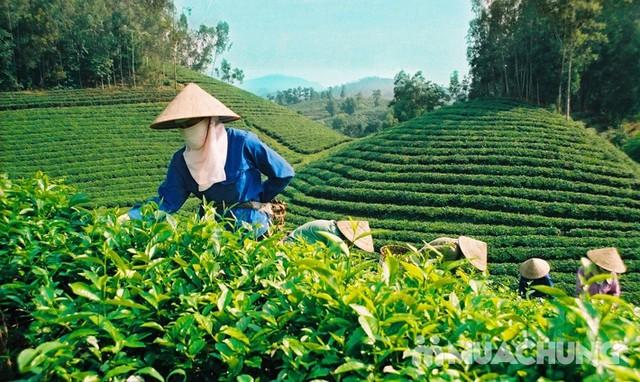 500gr chè búp non Thái Nguyên đặc biệt - 17