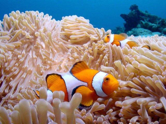Du ngoạn 4 đảo kết hợp lặn biển Nha Trang - 6