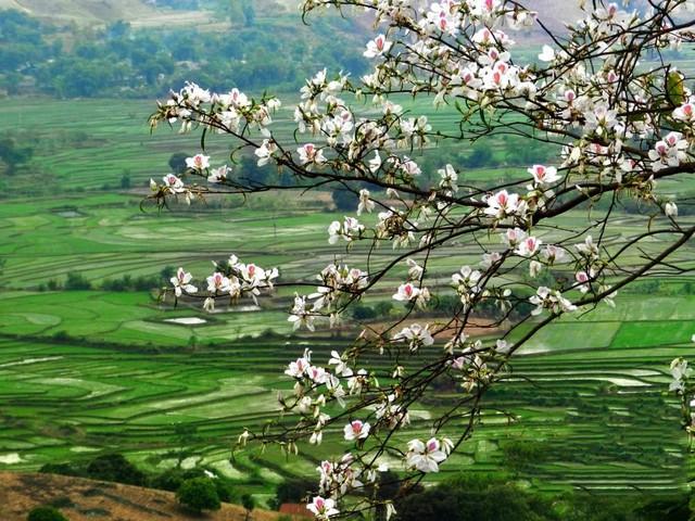 Mai Châu - Mộc Châu - Thiên Thai - Đền Bồng Lai - 5