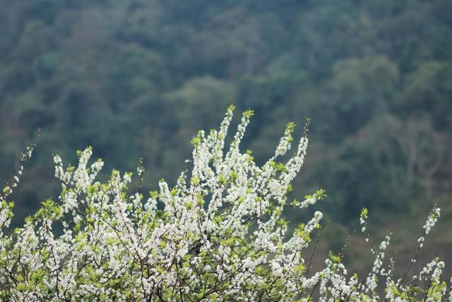 Mai Châu - Mộc Châu - Thiên Thai - Đền Bồng Lai - 8