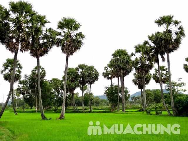 2 hộp đường thốt nốt Thành Lộc thơm dịu 500g/ hộp - 1