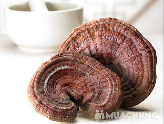 Nấm linh chi đỏ cao cấp Hàn Quốc tặng kẹo hồng sâm - 6