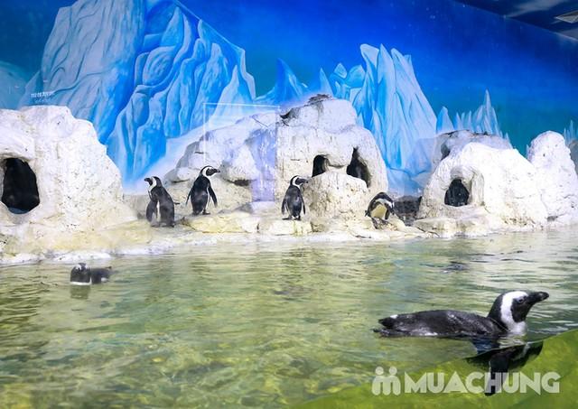 Vé tham quan thủy cung Vinpearlland Aquarium trẻ em - 23
