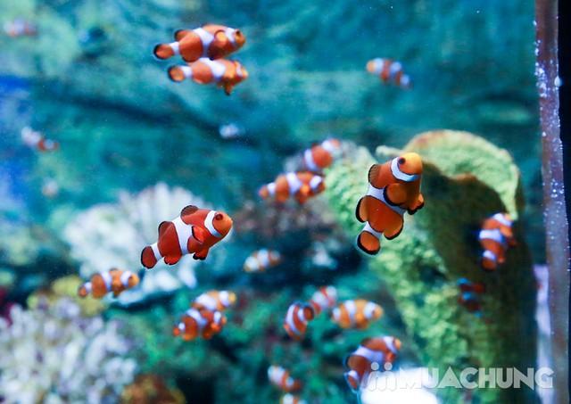 Vé tham quan thủy cung Vinpearlland Aquarium trẻ em - 6