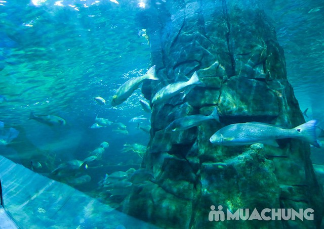 Vé tham quan thủy cung Vinpearlland Aquarium trẻ em - 17