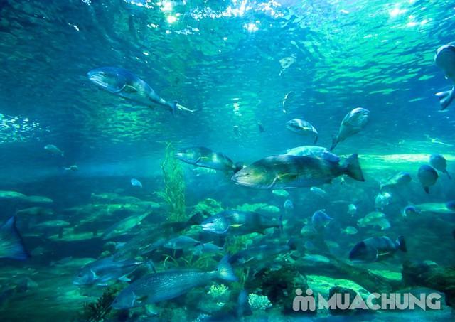 Vé tham quan thủy cung Vinpearlland Aquarium trẻ em - 18