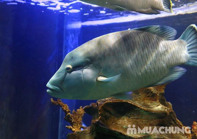 Vé tham quan thủy cung Vinpearlland Aquarium trẻ em - 8