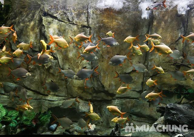 Vé tham quan thủy cung Vinpearlland Aquarium trẻ em - 1