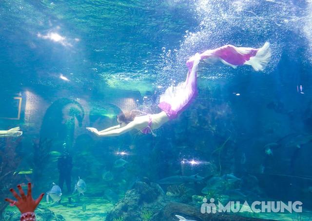 Vé tham quan thủy cung Vinpearlland Aquarium trẻ em - 26