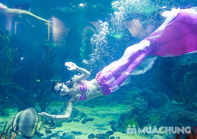 Vé tham quan thủy cung Vinpearlland Aquarium trẻ em - 27