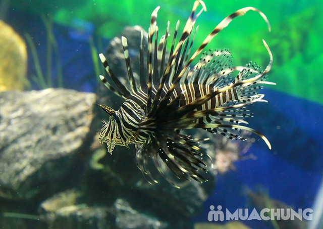 Vé tham quan thủy cung Vinpearlland Aquarium trẻ em - 7