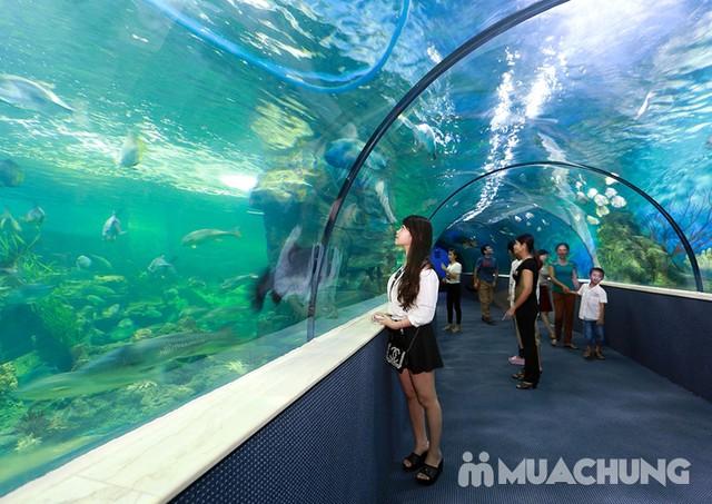 Vé tham quan thủy cung Vinpearlland Aquarium trẻ em - 13