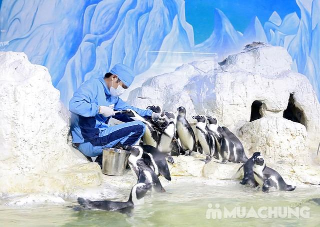 Vé tham quan thủy cung Vinpearlland Aquarium trẻ em - 22