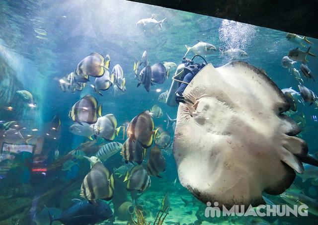 Vé tham quan thủy cung Vinpearlland Aquarium trẻ em - 14
