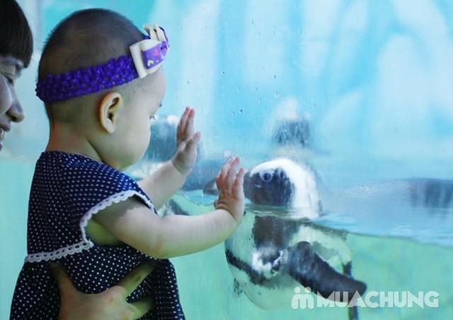 Vé tham quan thủy cung Vinpearlland Aquarium trẻ em - 21