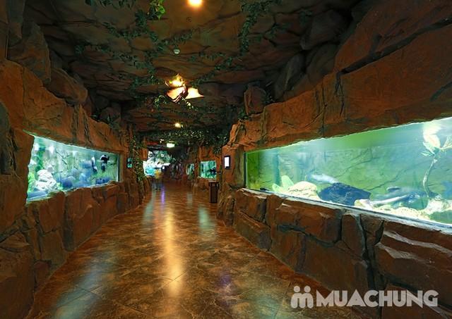 Vé tham quan thủy cung Vinpearlland Aquarium trẻ em - 4