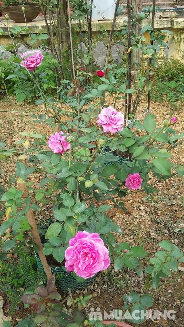Làm chủ toàn bộ nhà vườn Rose House 2N1Đ- Hòa Bình - 1