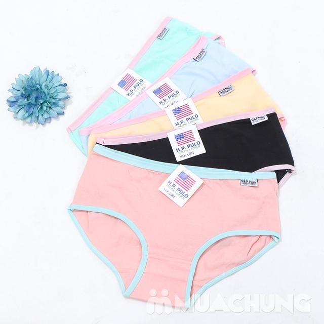 Combo 5 quần lót cotton trơn nhiều màu H&P.PULO - 12