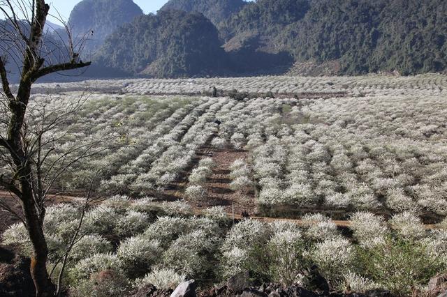 Khám phá Mộc Châu mùa hoa cải - Săn mây Tà Xùa  - 11